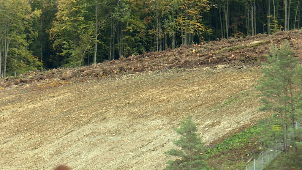 Rodungen am Steinbruch bei Thüngersheim