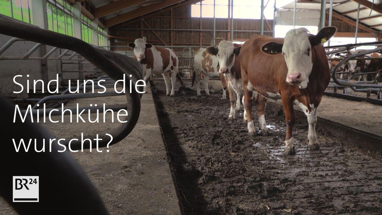 Tierwohl bei der Milch