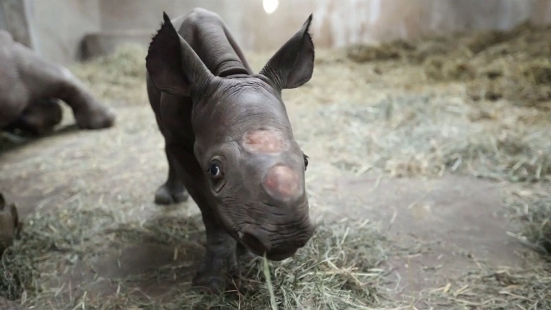 Der Junge wurde im Potter Park Zoo geboren.