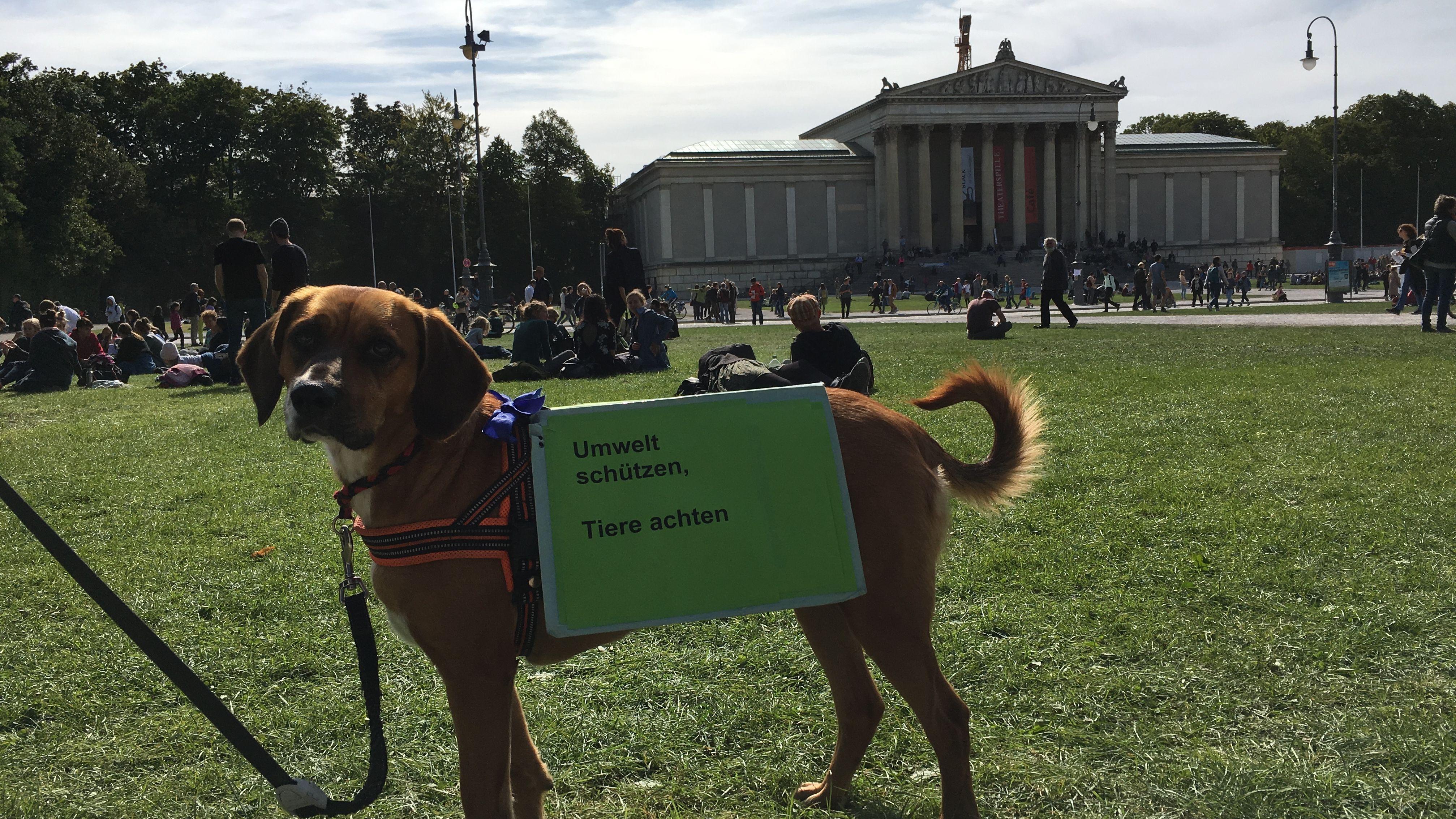 Auch ein Hund demonstriert fürs Klima