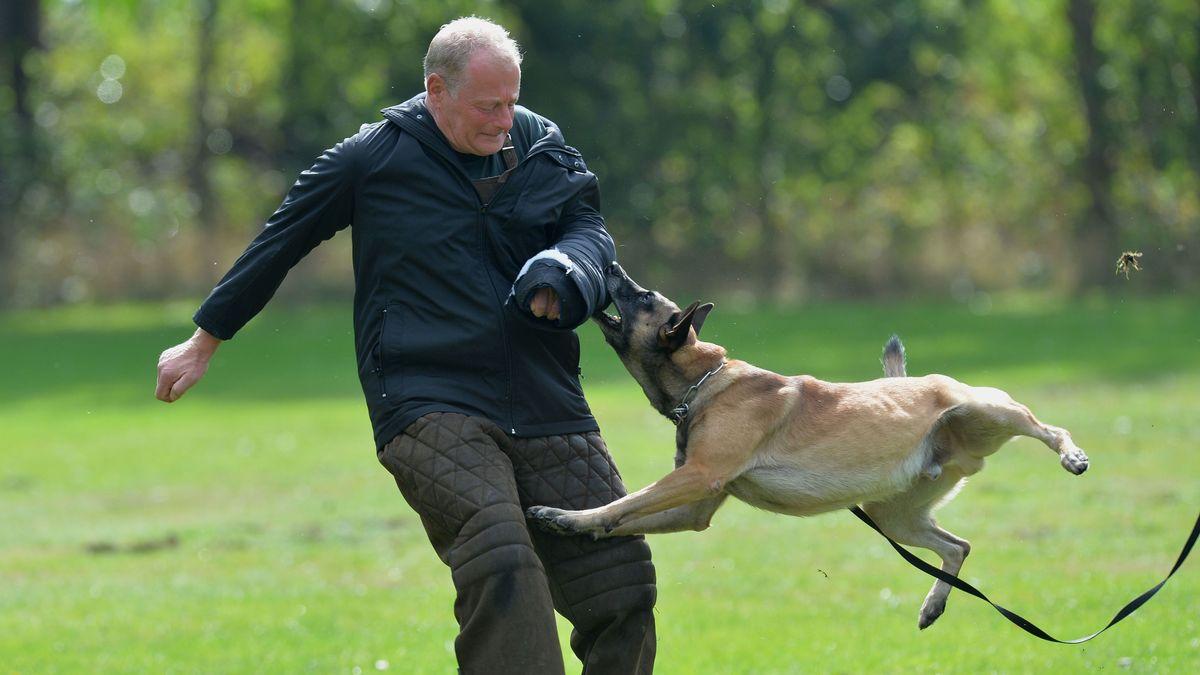 Hund und Trainer auf einem Übungsplatz