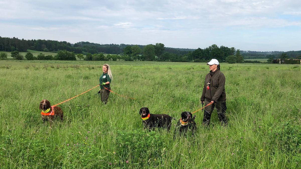 Ausgerüstet mit Spürhunden und Drohnen suchen Hunde und deren Hundeführerinnen nach Rehen, Hasen oder anderen Tieren auf einer großen Wiesenfläche bei Herrieden.