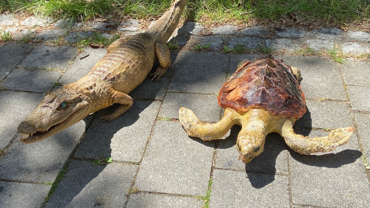 Ein ausgestopftes Krokodil und eine ausgestopfte Meeresschildkröte liegen nebeneinander auf einem gepflasterten Platz.