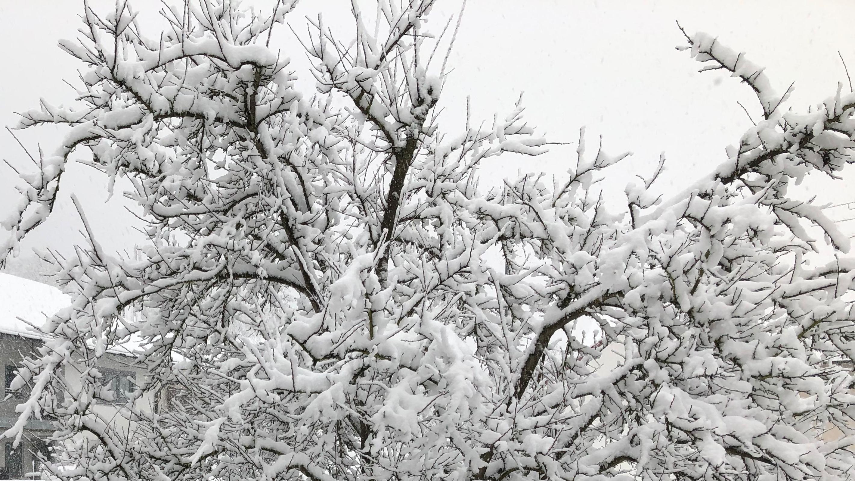 Viele Bäume sind wieder mit Neuschnee bedeckt - wie hier in Niederbayern