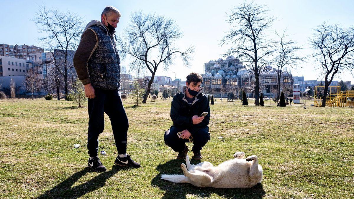 Das Bild zeigt einen Hund, der den Helfern bekannt ist und sich auf dem Rücken liegend freut.