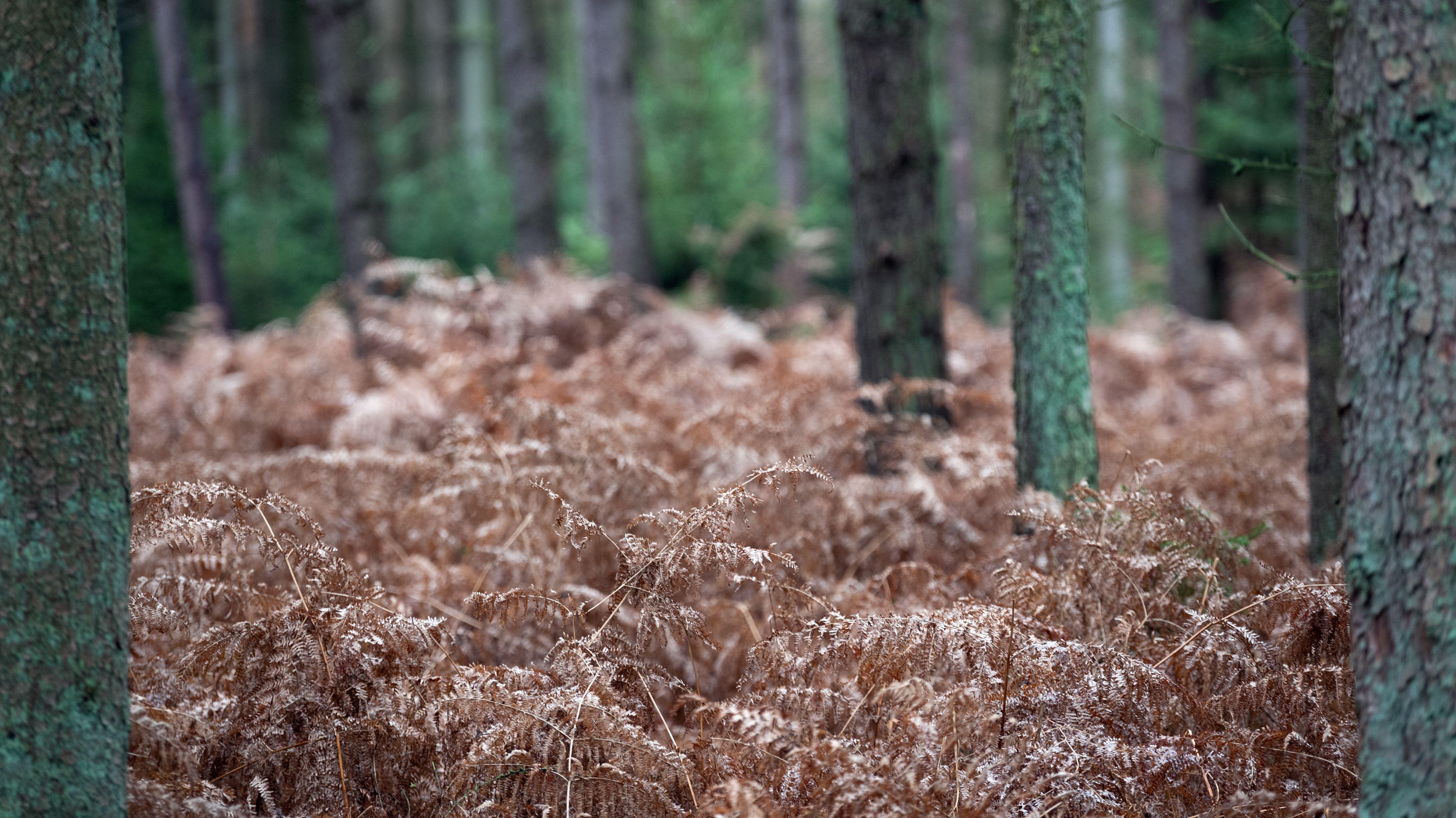 Trockener Waldboden (Symbolbild)