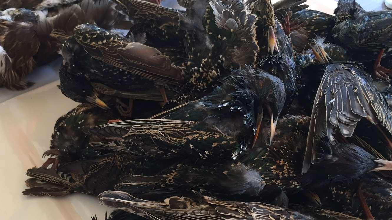 37 Vögel wurden im Oberpfälzer Landkreis mit hochtoxischem Kontaktgift getötet.
