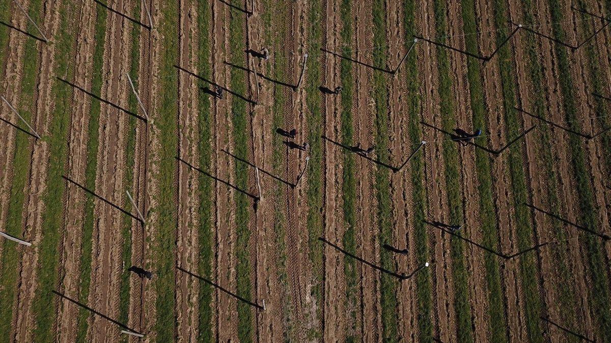 Die Landwirtschaft braucht Helfer: Vorbereitungen auf einer Anlage für Hopfen.