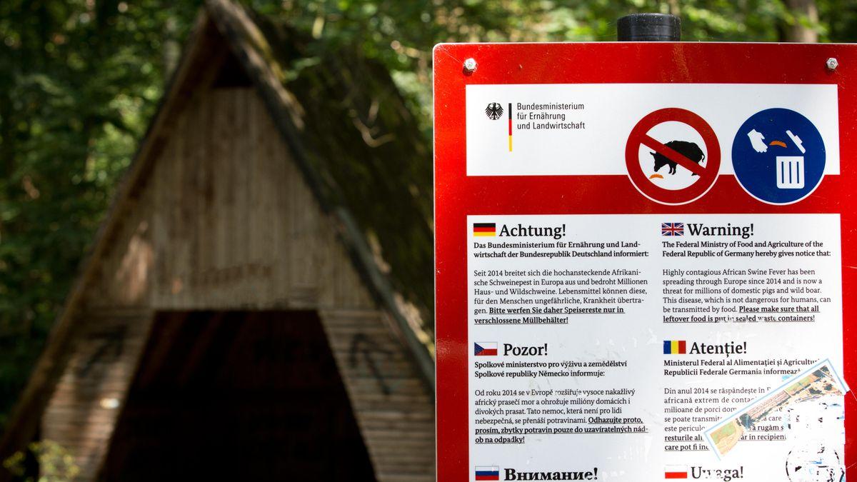 Warnschild vor afrikanischer Schweinepest