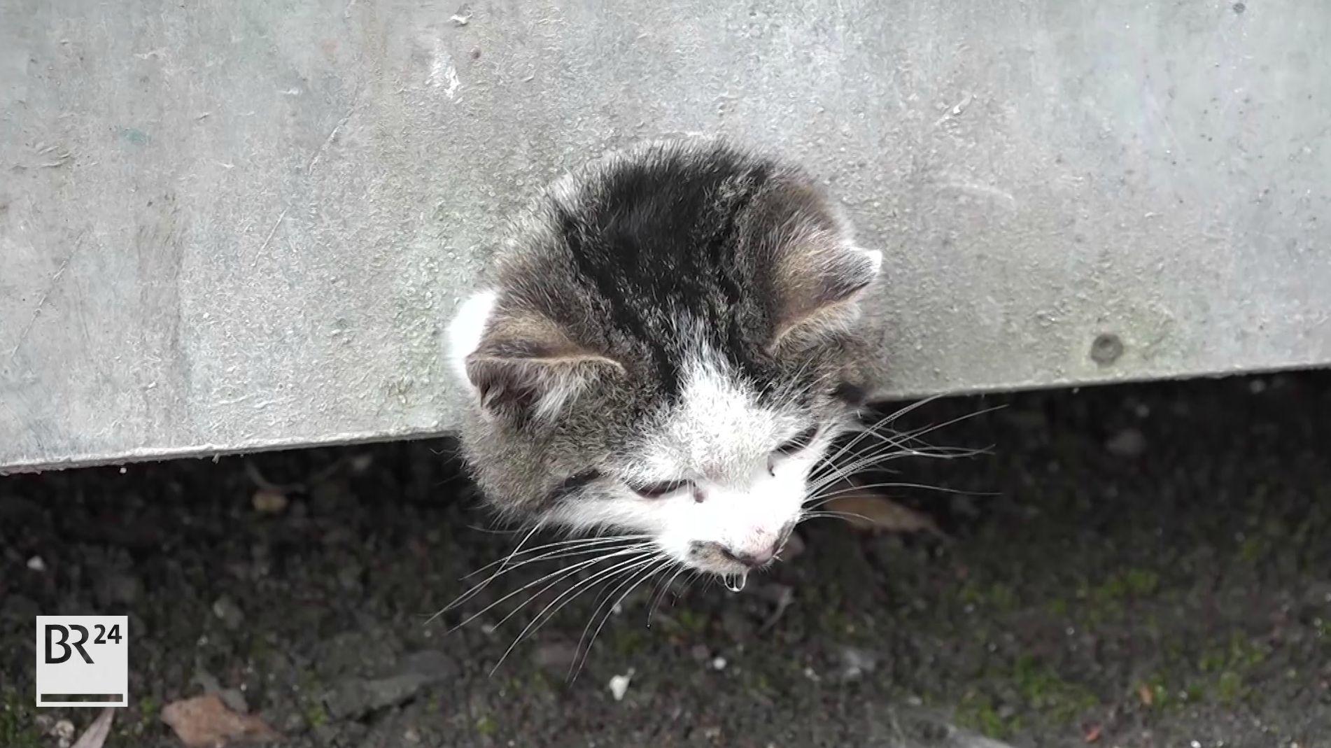 Katze steckt in Abfluss eines Abfallcontainers fest