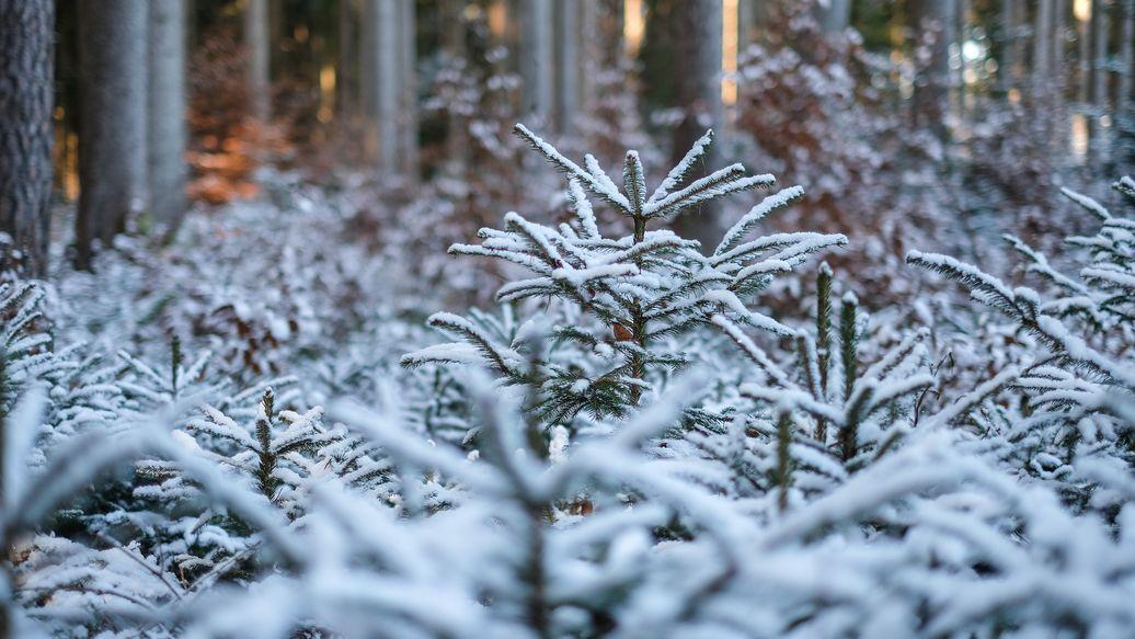 Verschneite junge Bäume im Wald