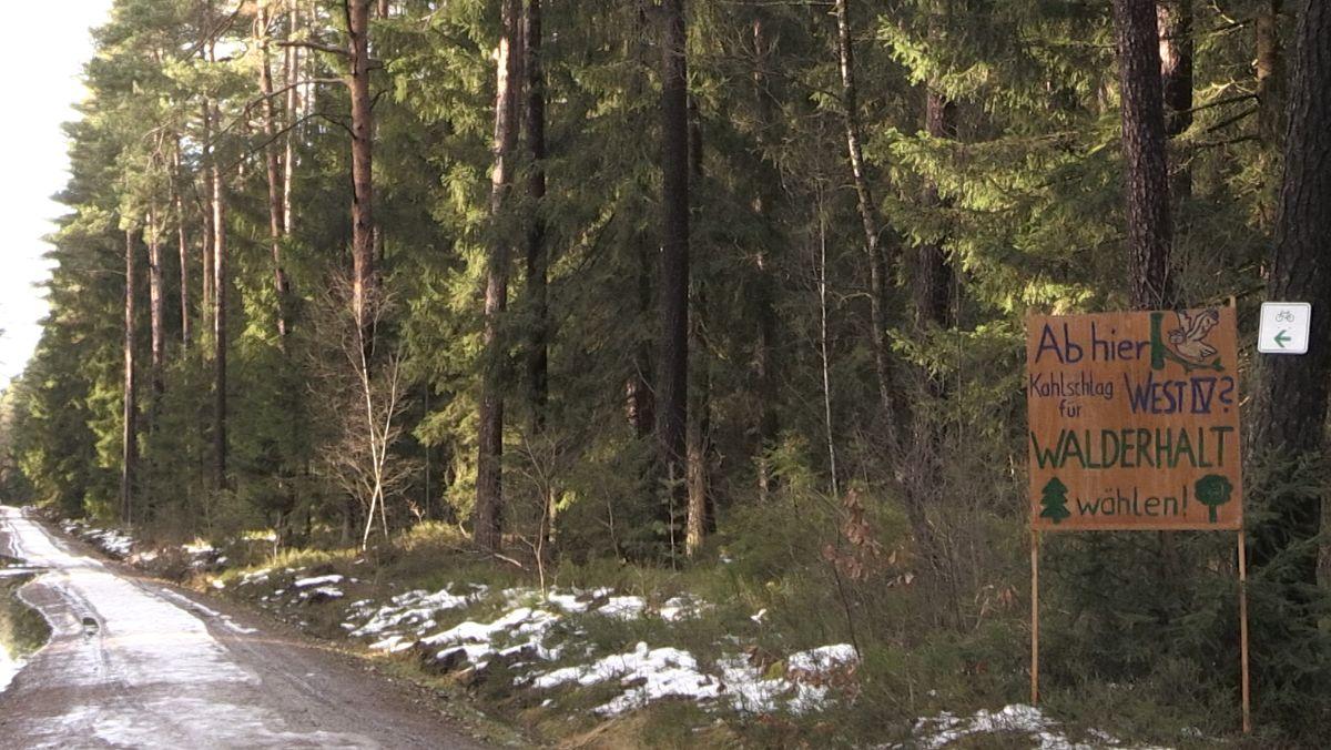 Dem geplanten Gewerbegebiet soll ein Wald weichen.