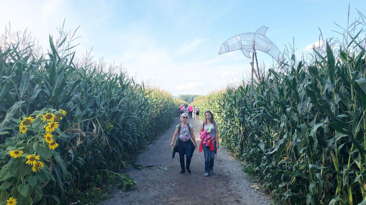 Zwei Besucherinnen im Maislabyrinth in Atting bei Straubing.