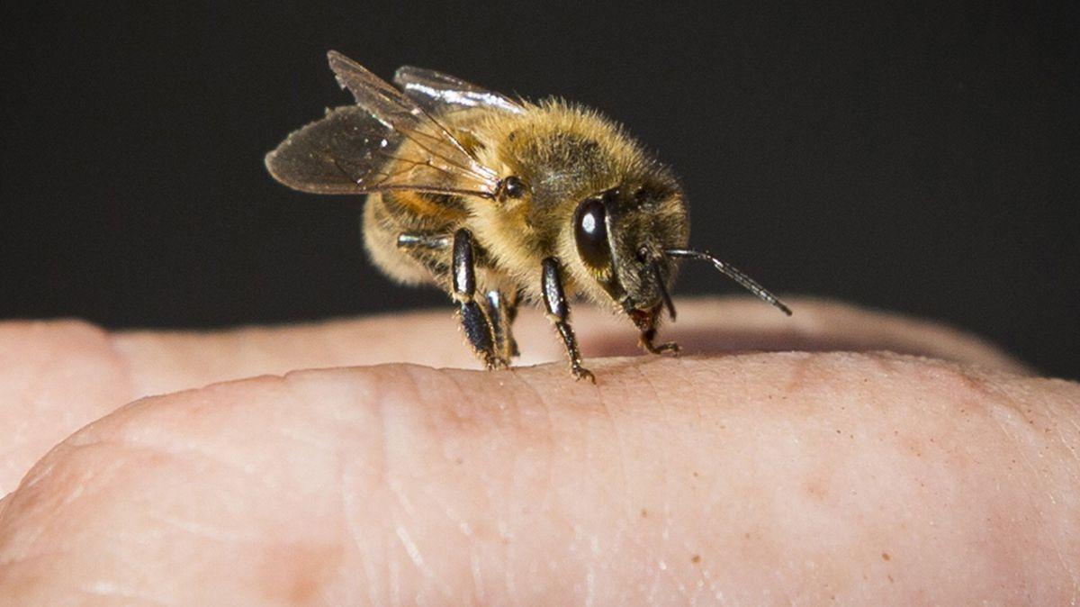 Eine Biene auf der Hand