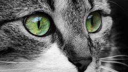 Katzenaugen | Bild:colourbox.com
