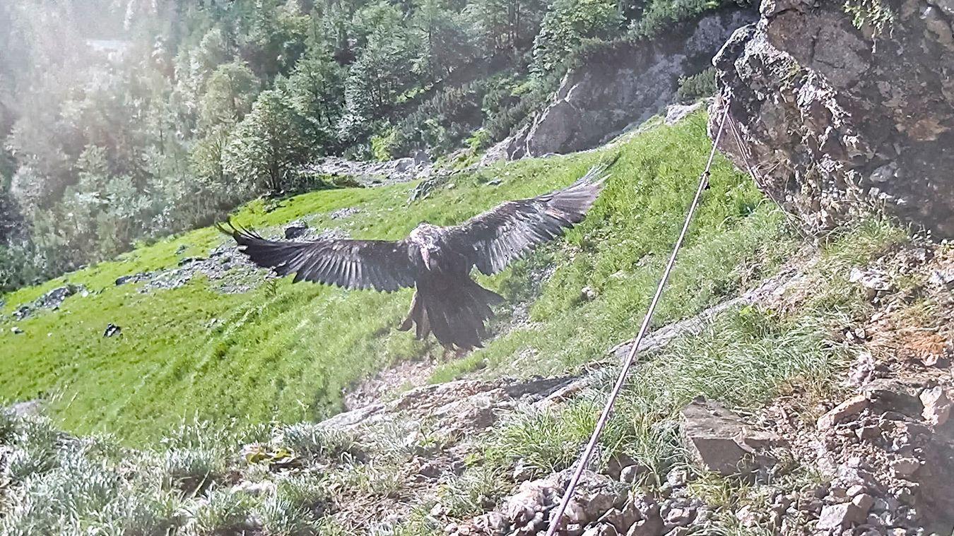 """Wally"" startet  bei ihrer Felswand im Klausbachtal im Nationalpark Berchtesgaden."