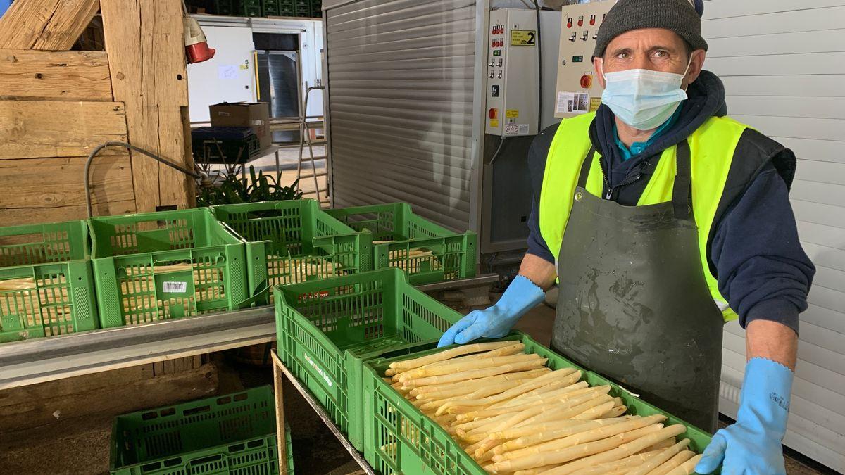 Spargelernte unter Coronabedingungen in Allersheim