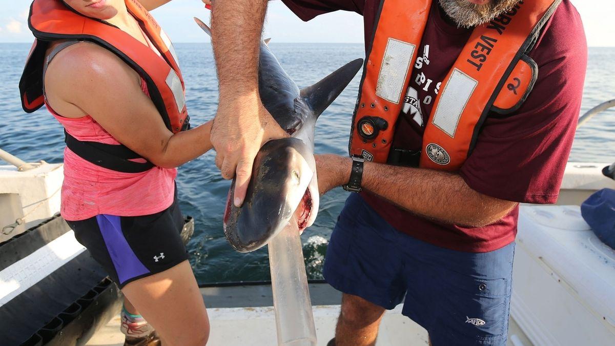 Babyhaie fressen Sperlinge, Schwalben und Zaunkönige.