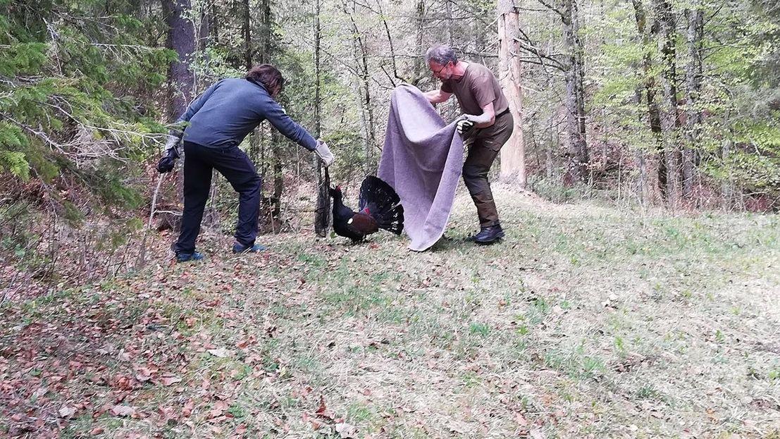 Ranger und Berufsjäger konnten das Tier gemeinsam einfangen und den Pfeil behutsam entfernen. Der Vogel blieb unverletzt.