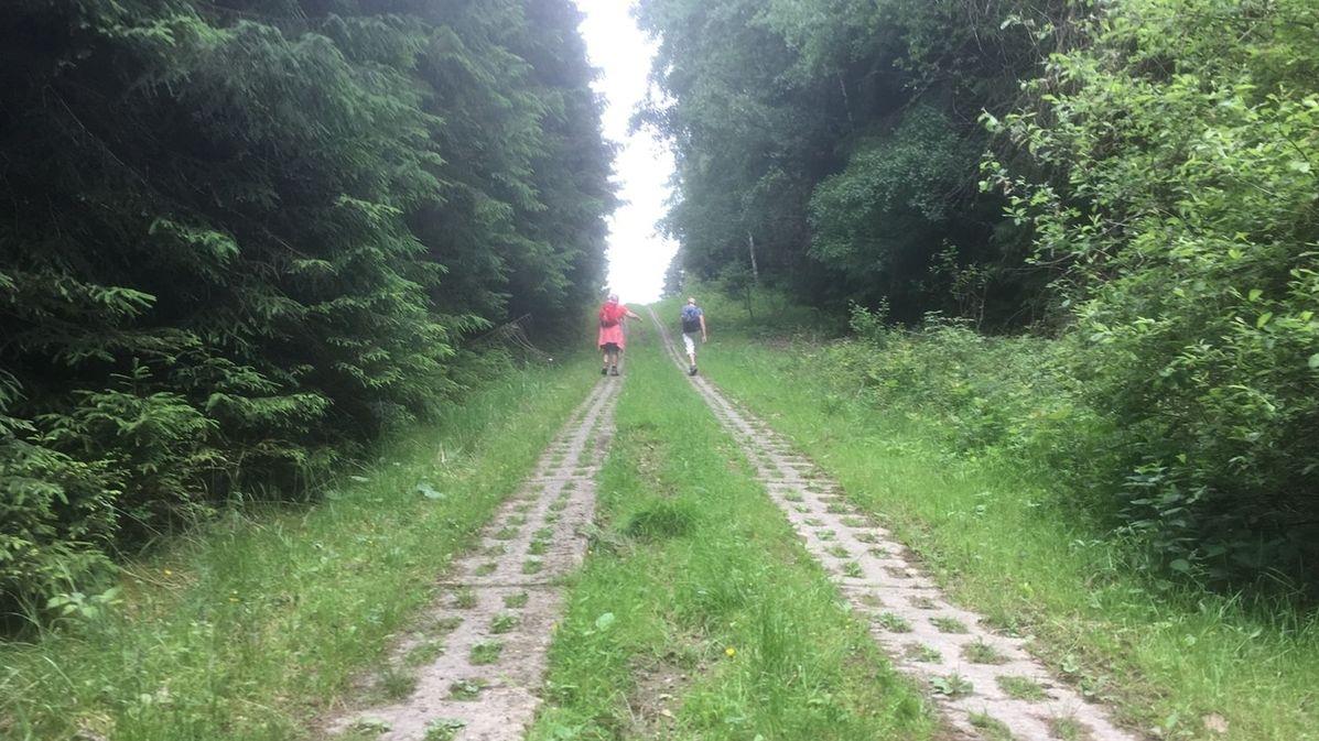 Zwei Menschen wandern auf der ehemaligen DDR-Grenze