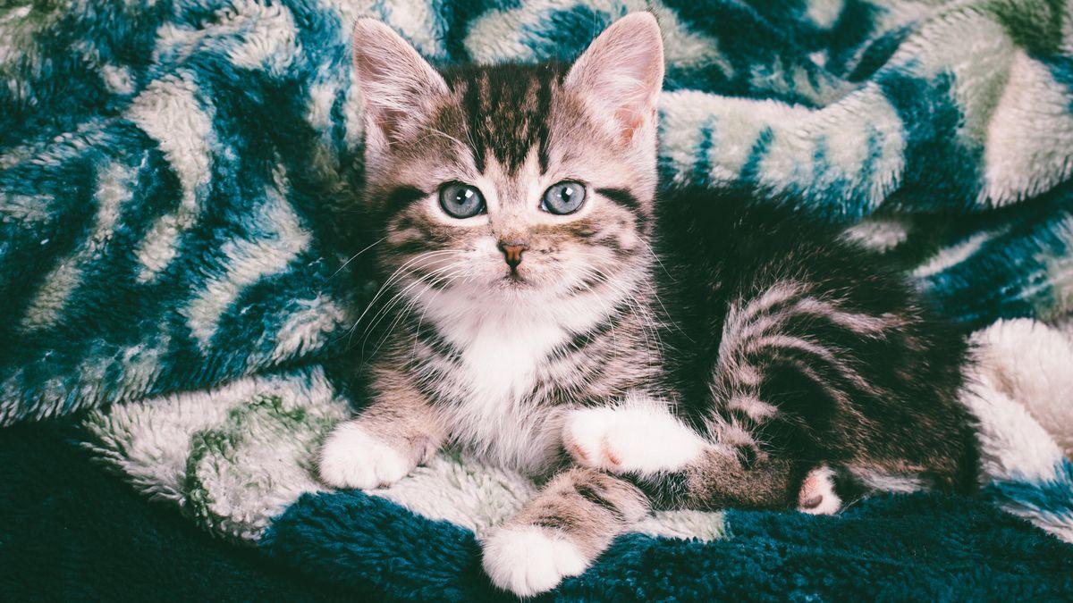 Eine kleine Katze (Symbolbild! Diese Katze kam nicht zu Schaden.)