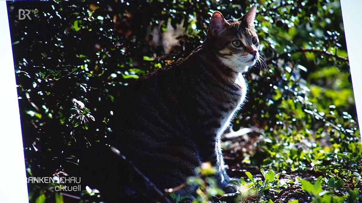 Foto einer vermissten Katze