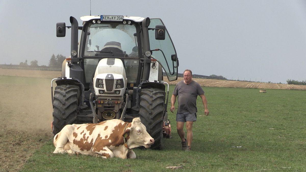 Eine Kuh wehrt sich gegen die Zerstörung ihrer Weidefläche und  blockiert den Traktor