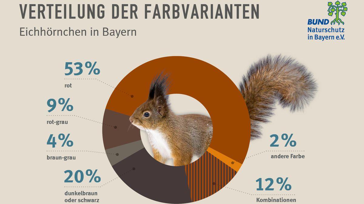 Die Farbverteilung unter den Eichhörnchen