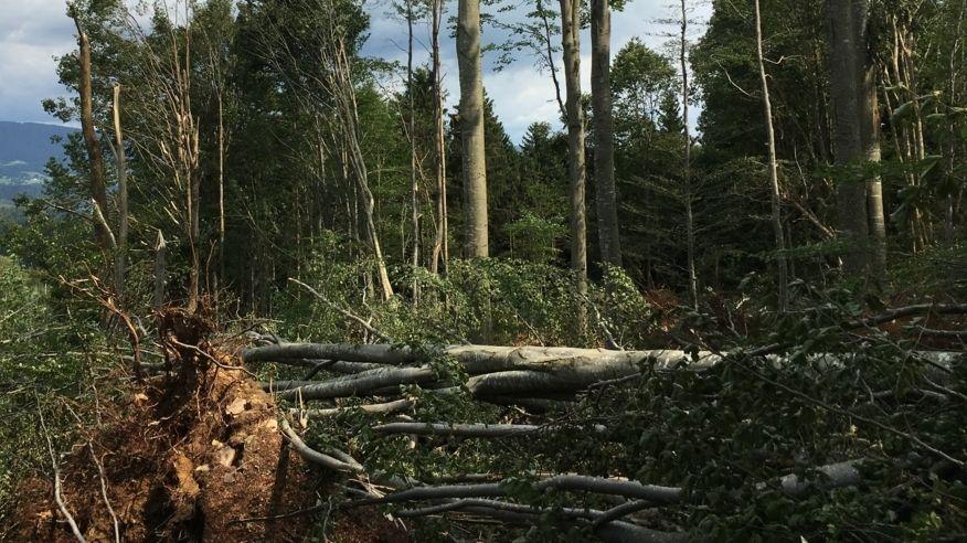 Entwurzelter Baum in einem Wald (Symbolbild)
