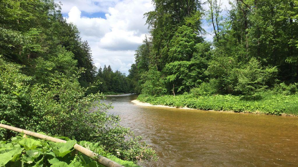 """In der Serie """"Wandern vor der Haustür"""" mit Wandertipps für die Pfingstferien 2020 geht es mit der Traunrunde durchs Trauntal. Der Wanderweg ist 16 Kilometer lang und führt größtenteils am Wasser entlang und durch Auernwälder."""