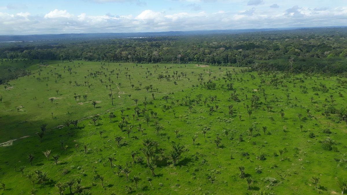 Luftblick auf abgeholzte Fläche des Amazonas im Mai 2019.