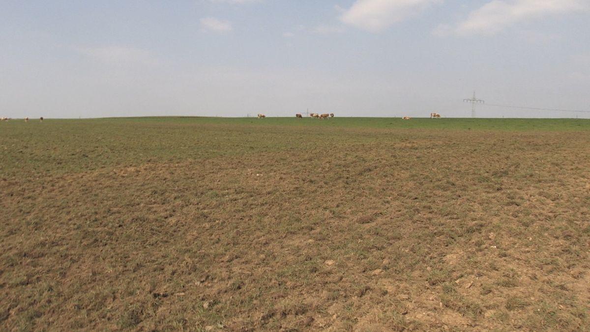 NACHHER: So sieht die Weide nach dem Umpflügen aus