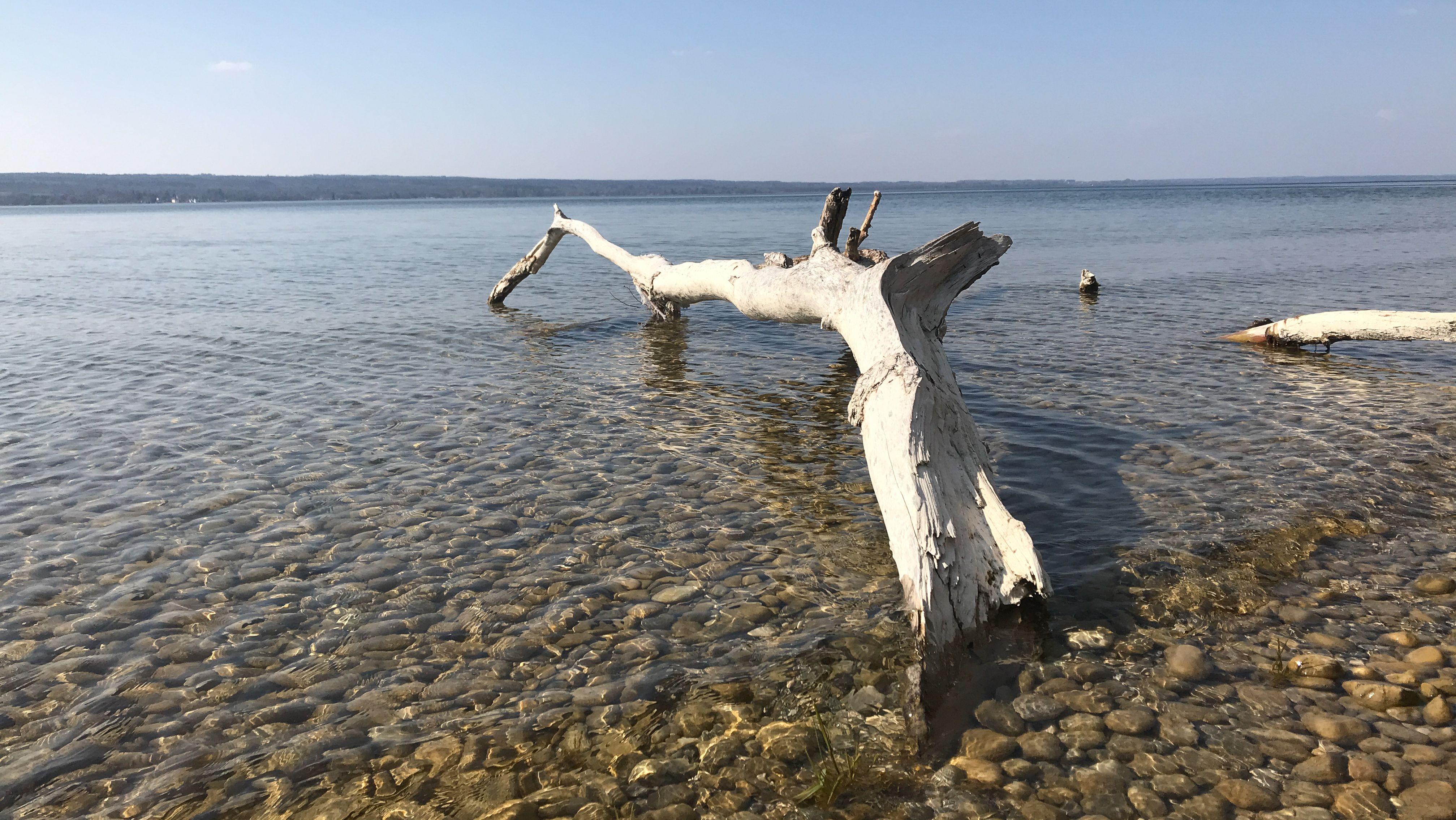 Ufer des Ammersees.