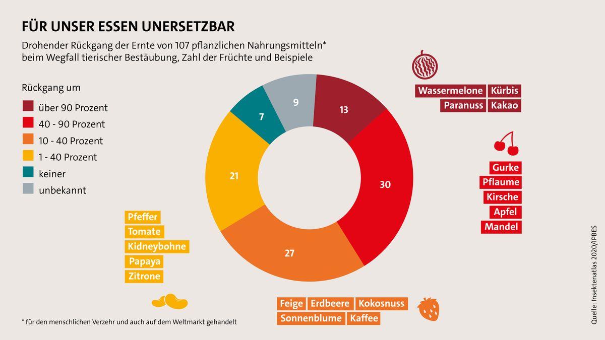 Insektenatlas 2020 von BUND und Heinrich-Böll-Stiftung: Ungefähr ein Achtel der wichtigsten pflanzlichen Agrargüter hängt von Bestäubern ab.