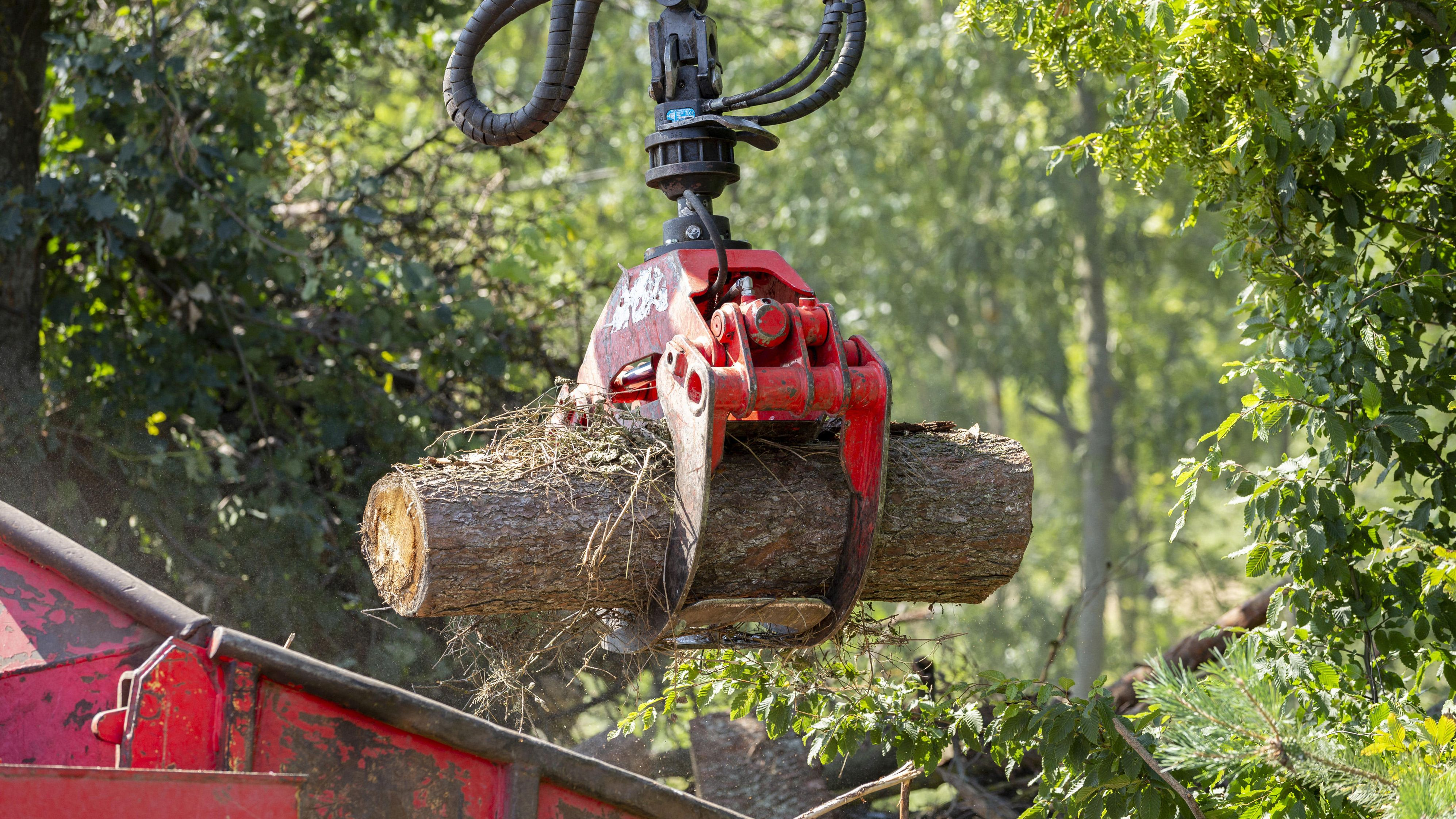 Käferholzbeseitigung mit Holzkran