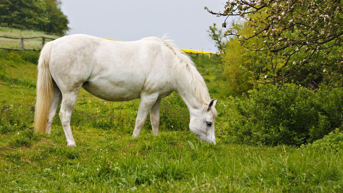 Symbolbild: Pferd auf einer Koppel