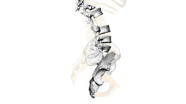 Aufnahme der 3D-Rekonstruktion eines Neandertaler-Skeletts.
