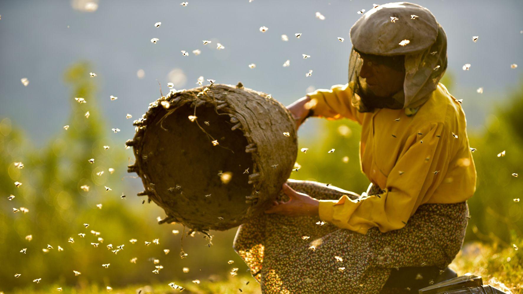 Eine Frau sitzt auf einer Holzkiste und hält einen leeren Bienenkorb in der Hand. Ihr Gesicht ist mit einem Tuch vor den Bienen geschützt, die um sie herumschwirren.