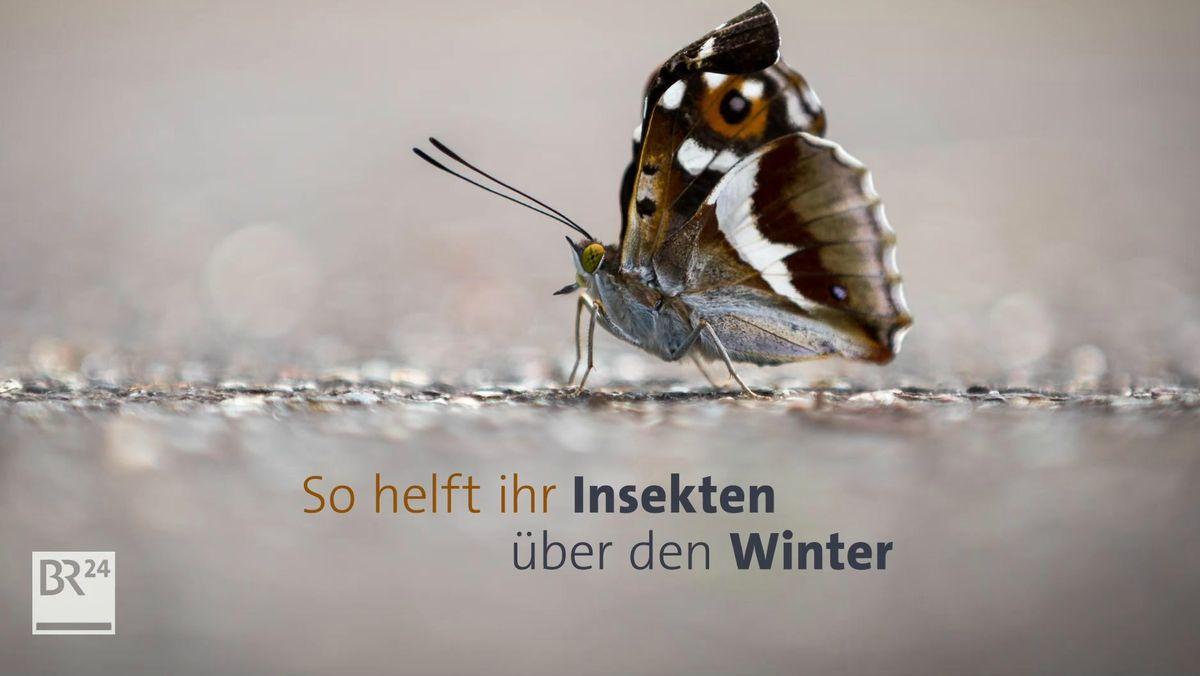 #fragBR24💡 So helft ihr Insekten über den Winter