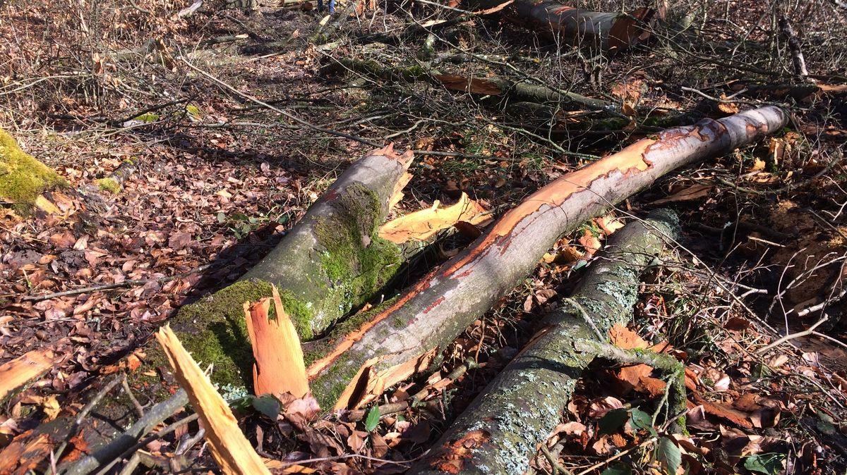 Nach Kritik von Naturschützern wurde der sofortige Holzerntestopp für das betroffene Gebiet angeordnet.