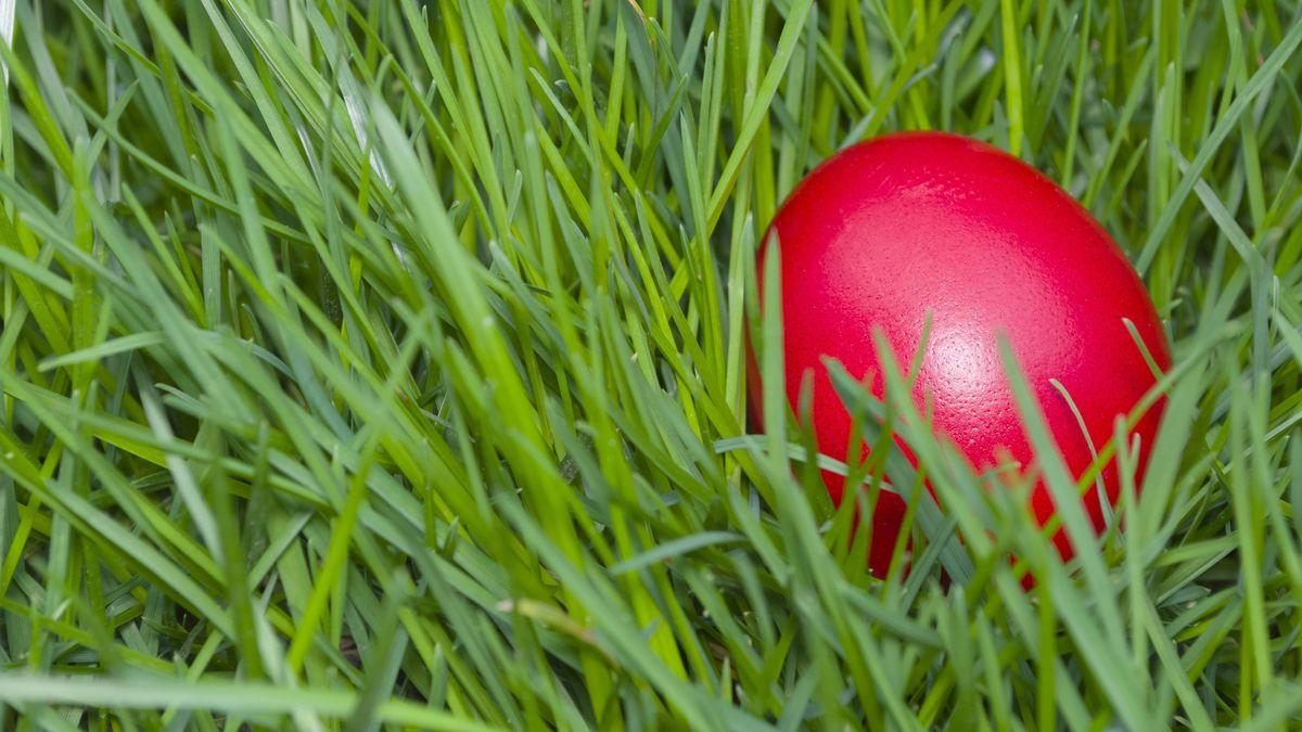 Ein rot gefärbtes Ei in einer Wiese