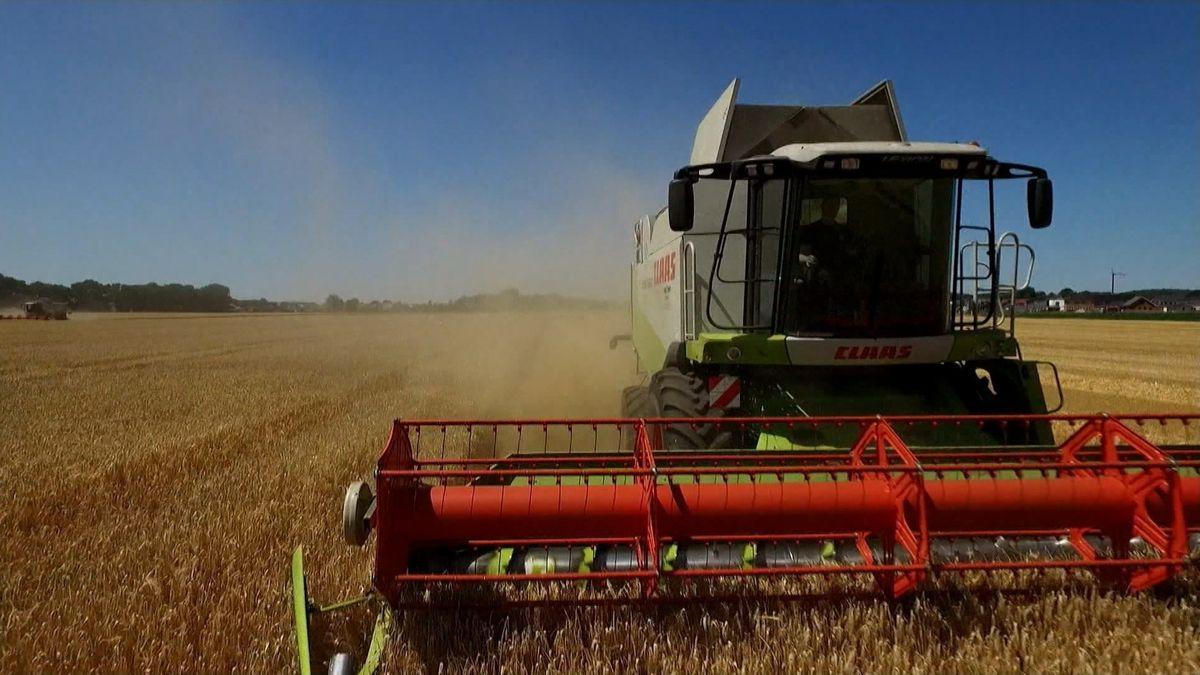 Traktor auf Weizenfeld beim Pflügen
