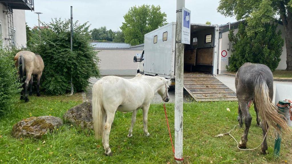 Drei der befreiten Pferde. Im Hintergrund der Transporter.