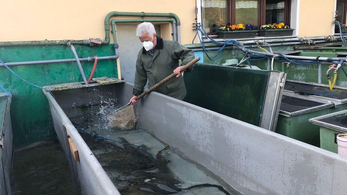 Fischwirtschaftsmeister Karl-Heinz Steinl mit seinen Karpfen.