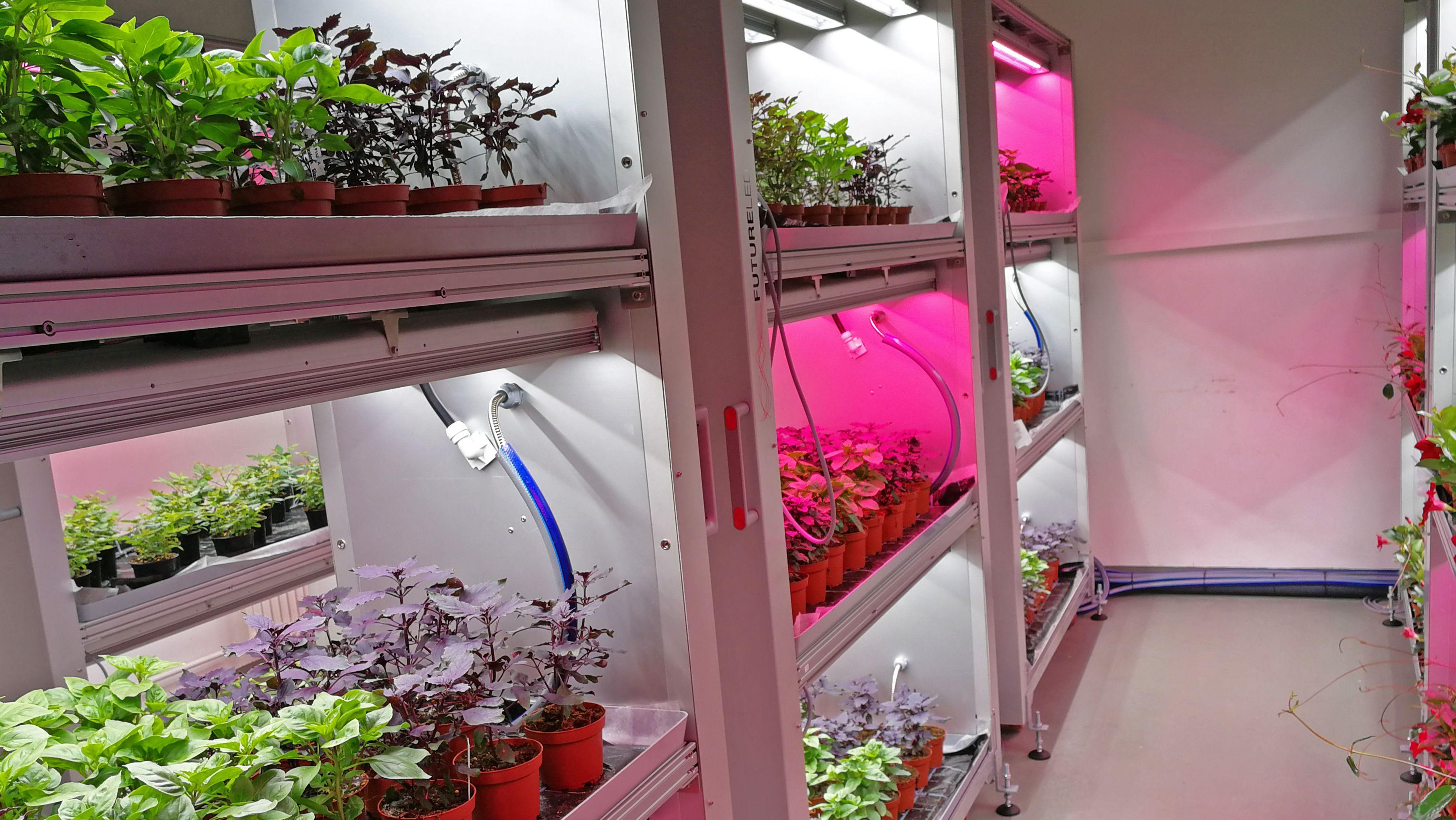 Versuche mit LED-Beleuchtung an der LWG Veitshöchheim