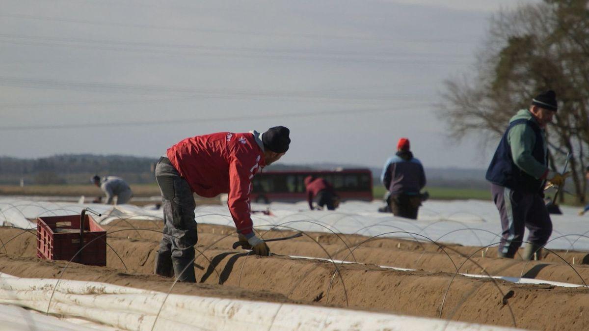 Saisonarbeitskräfte aus dem Ausland sind aus der deutschen Landwirtschaft nicht wegzudenken. Doch was passiert, wenn sie krank werden?