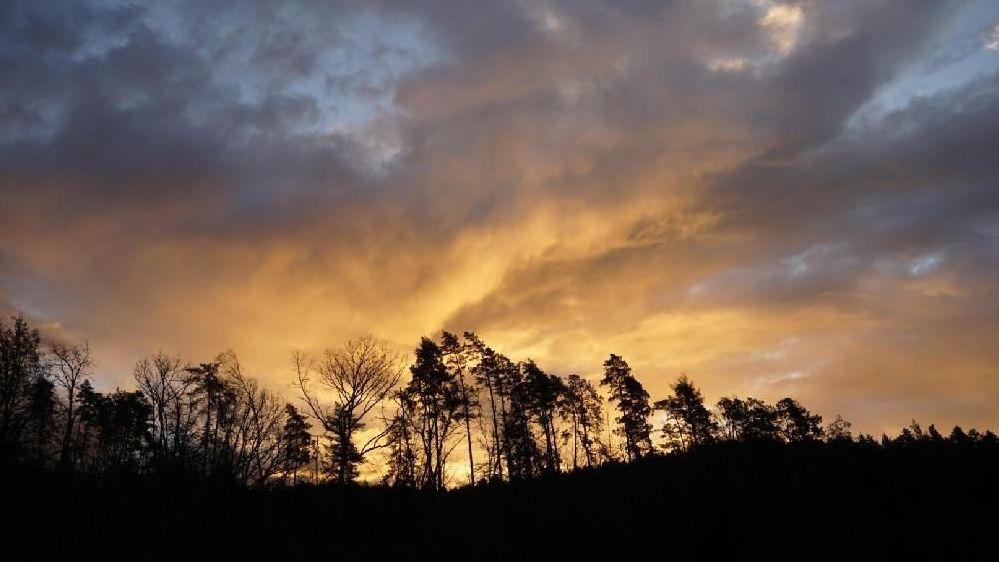 Bäume biegen sich vor gelbem Himmel im Wind