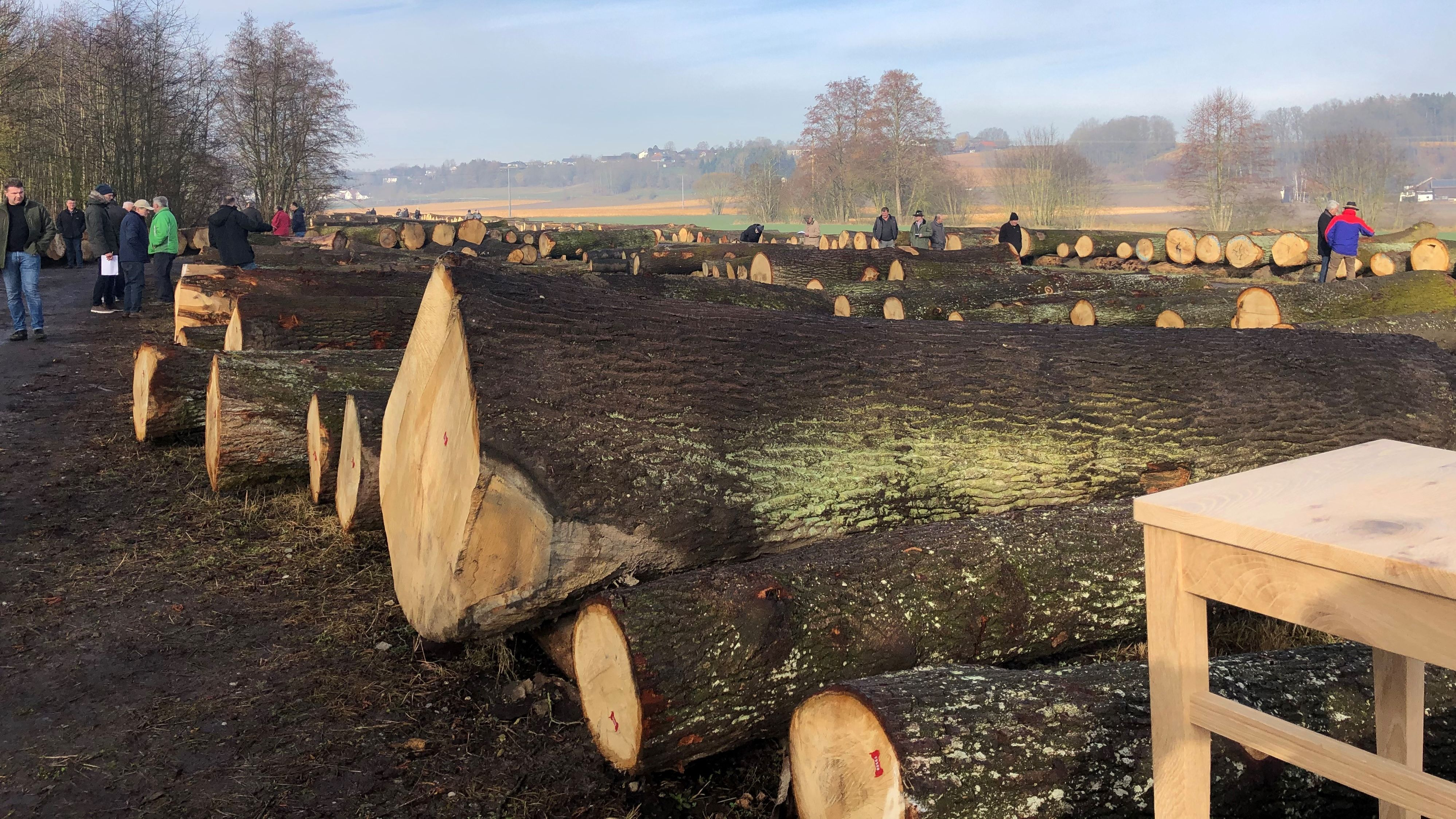 Dicke Holzstämme liegen nebeneinander, zum Verkauf bereit