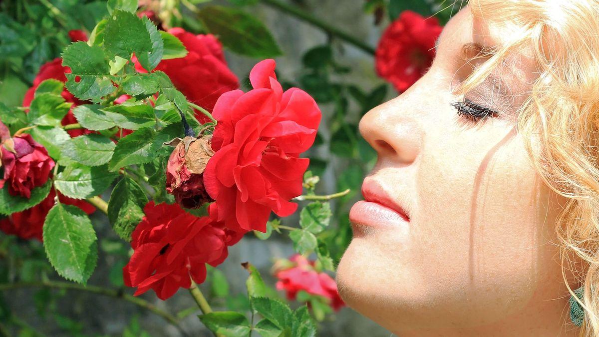 Eine Frau riecht an einer duftenden Rosenblüte: Mit SARS-CoV-2-Infizierte können offenbar einige Zeit nichts oder wenig riechen.