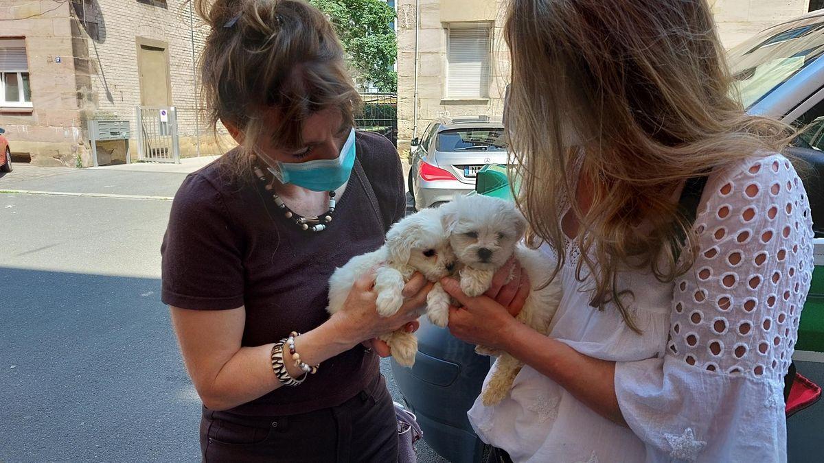 Zwei Frauen mit Mundschutz halten zwei kleine weiße Hunde auf dem Arm.